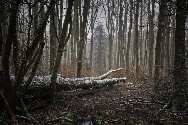 Forêt-tempête