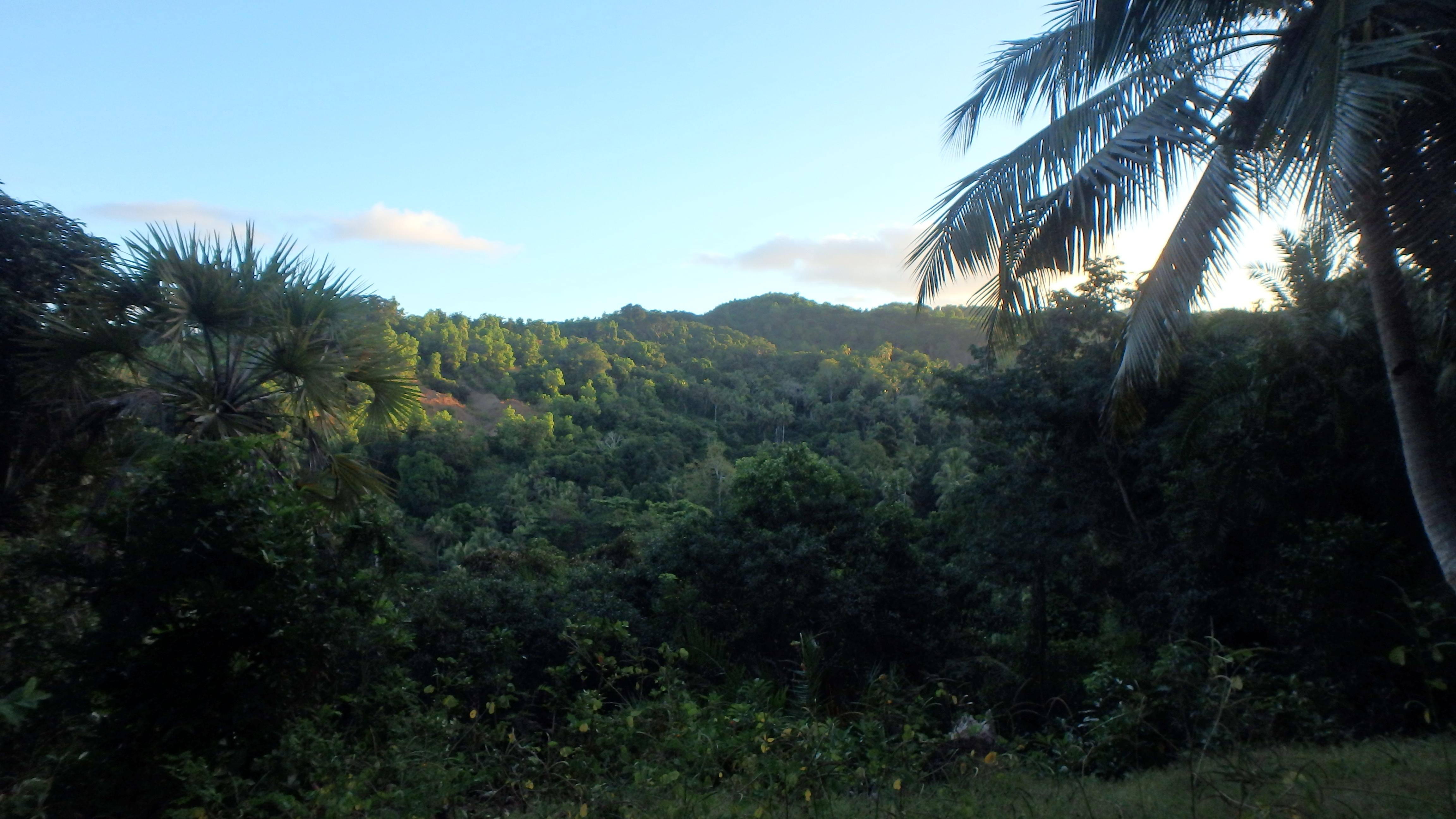 Ecofor - Tropical