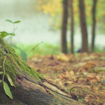 Colloque ANR « Arbre, bois, forêt et sociétés », 30 mars au 1er avril 2021, Bordeaux