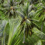 """Activités tropicales - Colloque """"écosystèmes tropicaux"""""""
